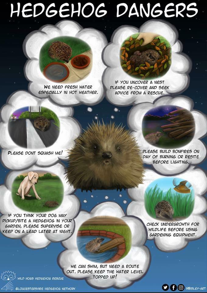 Hedgehog Dangers Poster