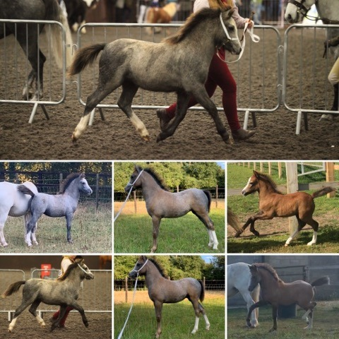 Amy Harris & Pennydown Fire Queen (1-4mnths)