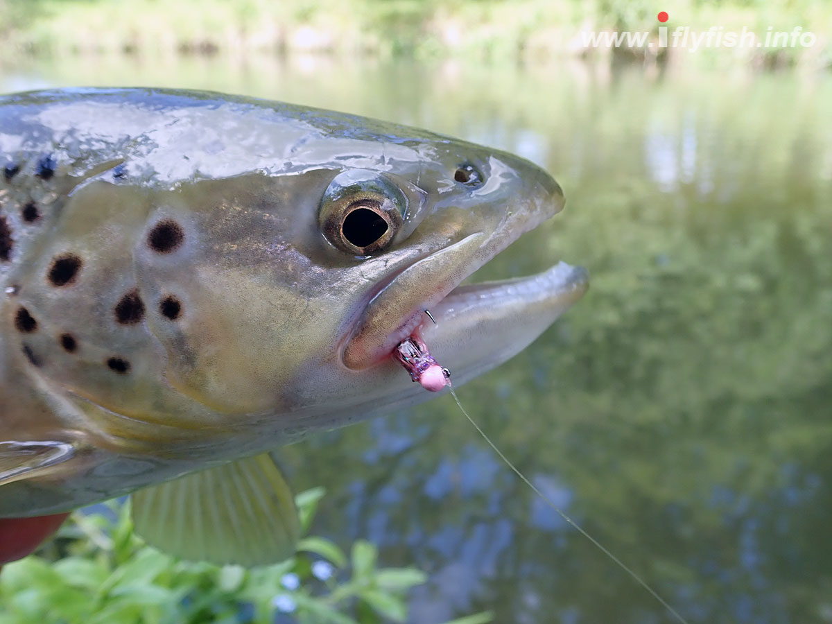20190701-Trout_fly.jpg