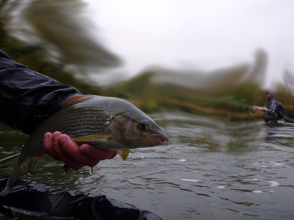 20141122_small_Grayling.jpg