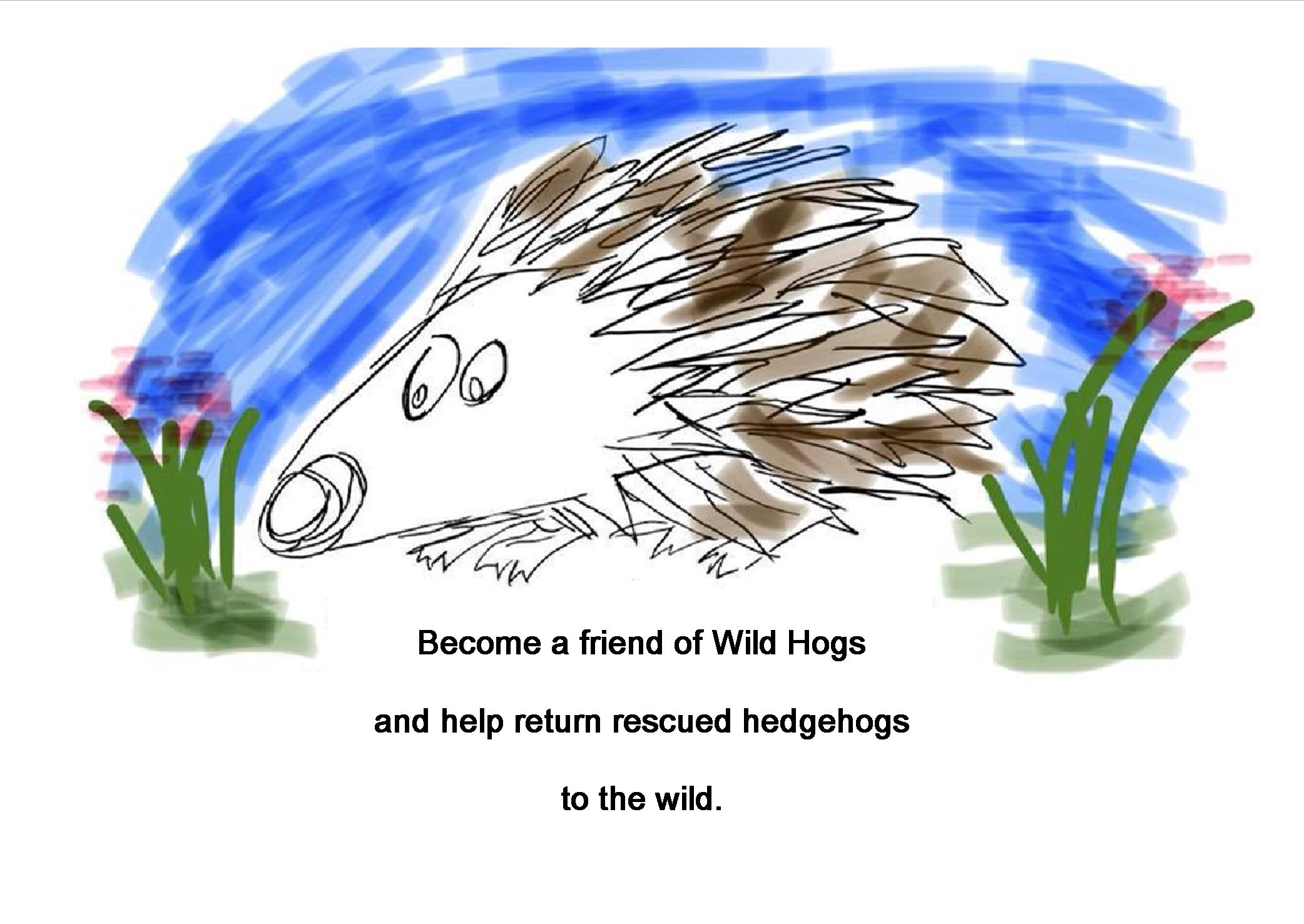 Join as a Friend of Wild Hogs