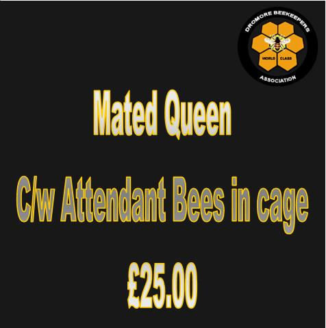 Mated Queen in Cage