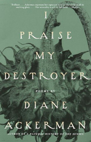 I Praise my Destroyer paperback