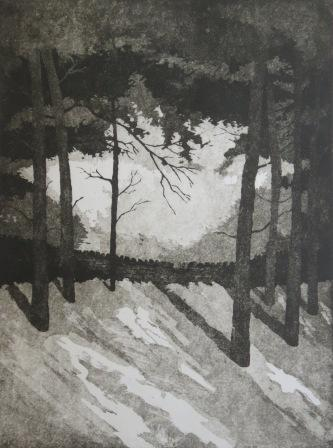 Pine trees at Hardcastle Crags, Hebden Bridge, etching by Kevin Brown