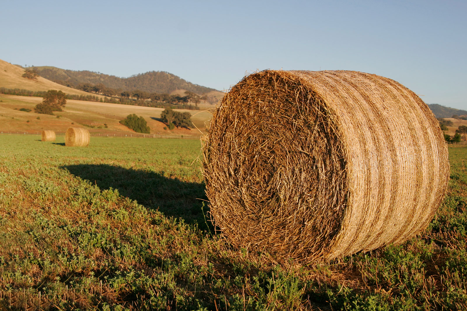 DONATE: Large Round Bale Hay
