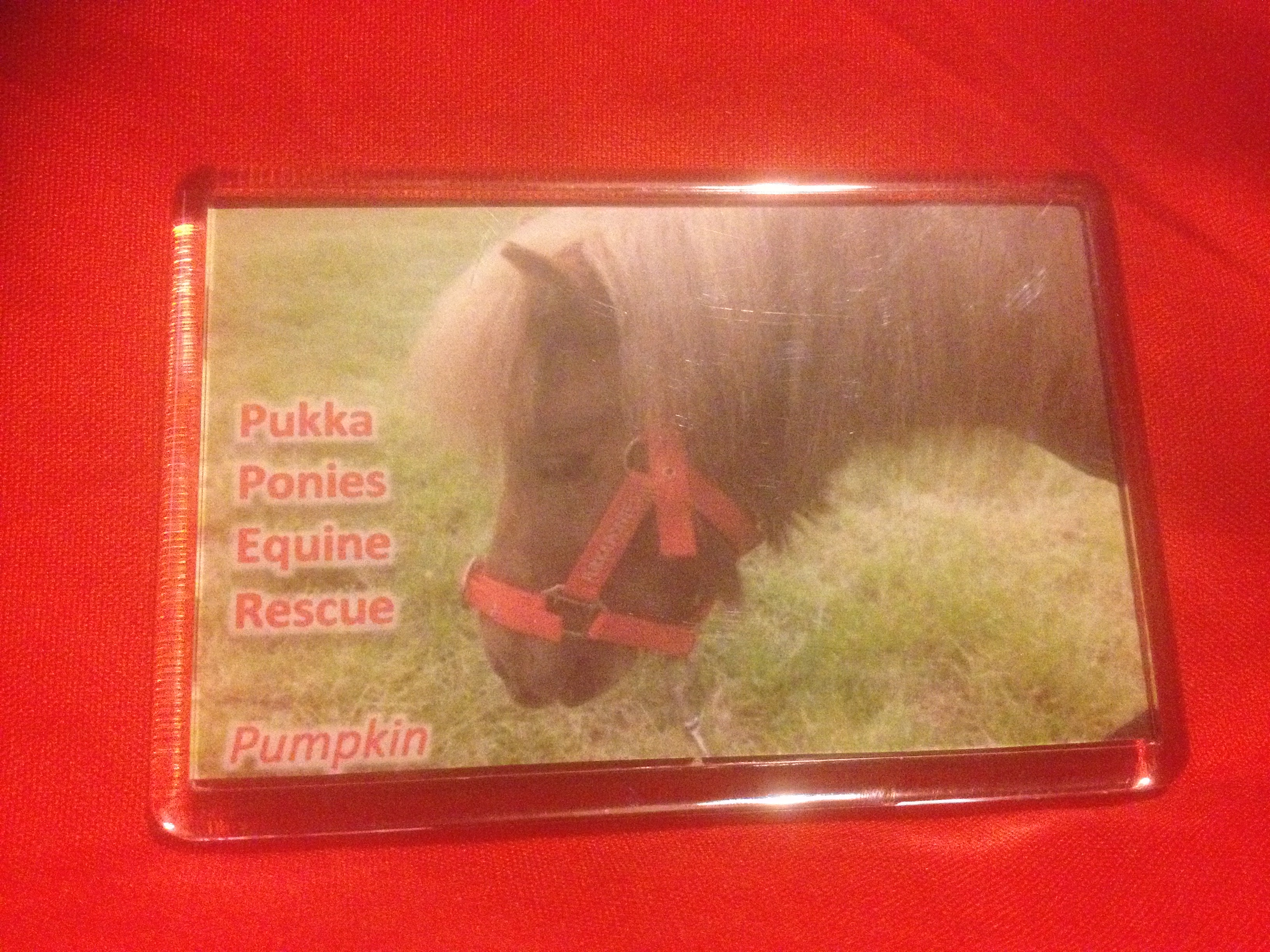 Fridge Magnet - Pumpkin