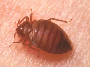 bed bug pest control london