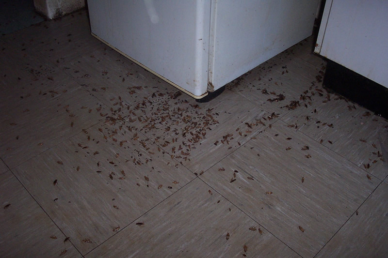 cockroach control in london image