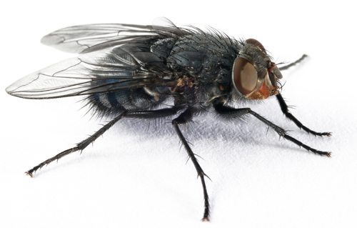 fly pest control London