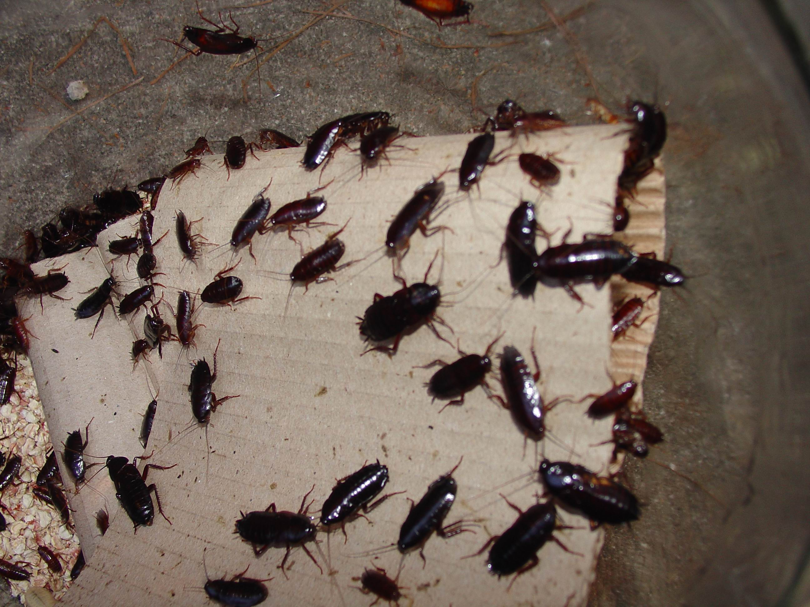 image of cockroach control london