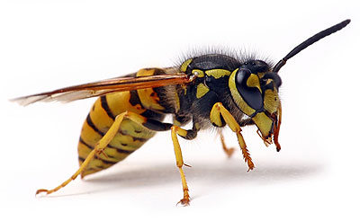 wasp pest control London