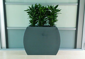 decorative plant in an office building