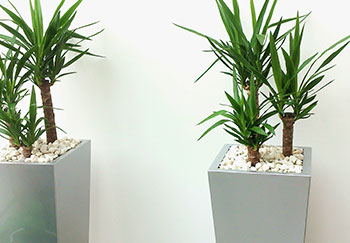 plants in a hallway