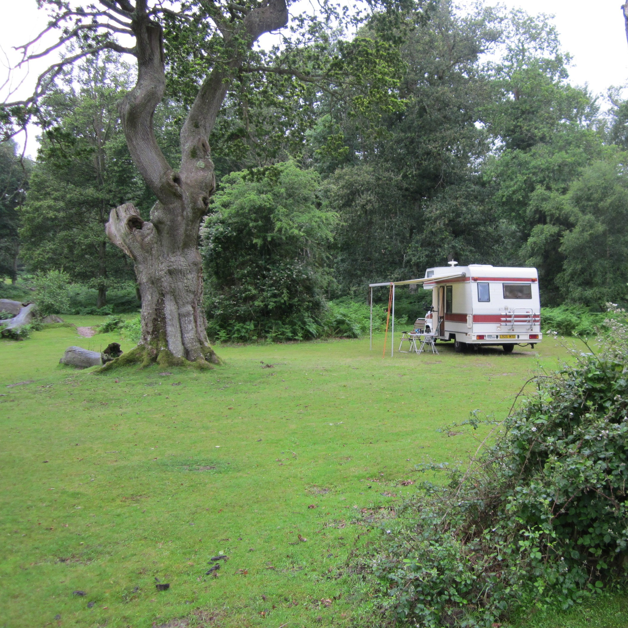 Our Old Bus - in the New Forest