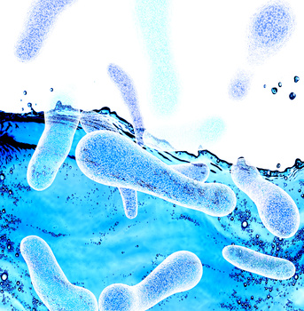 Legionella Risk Assessments