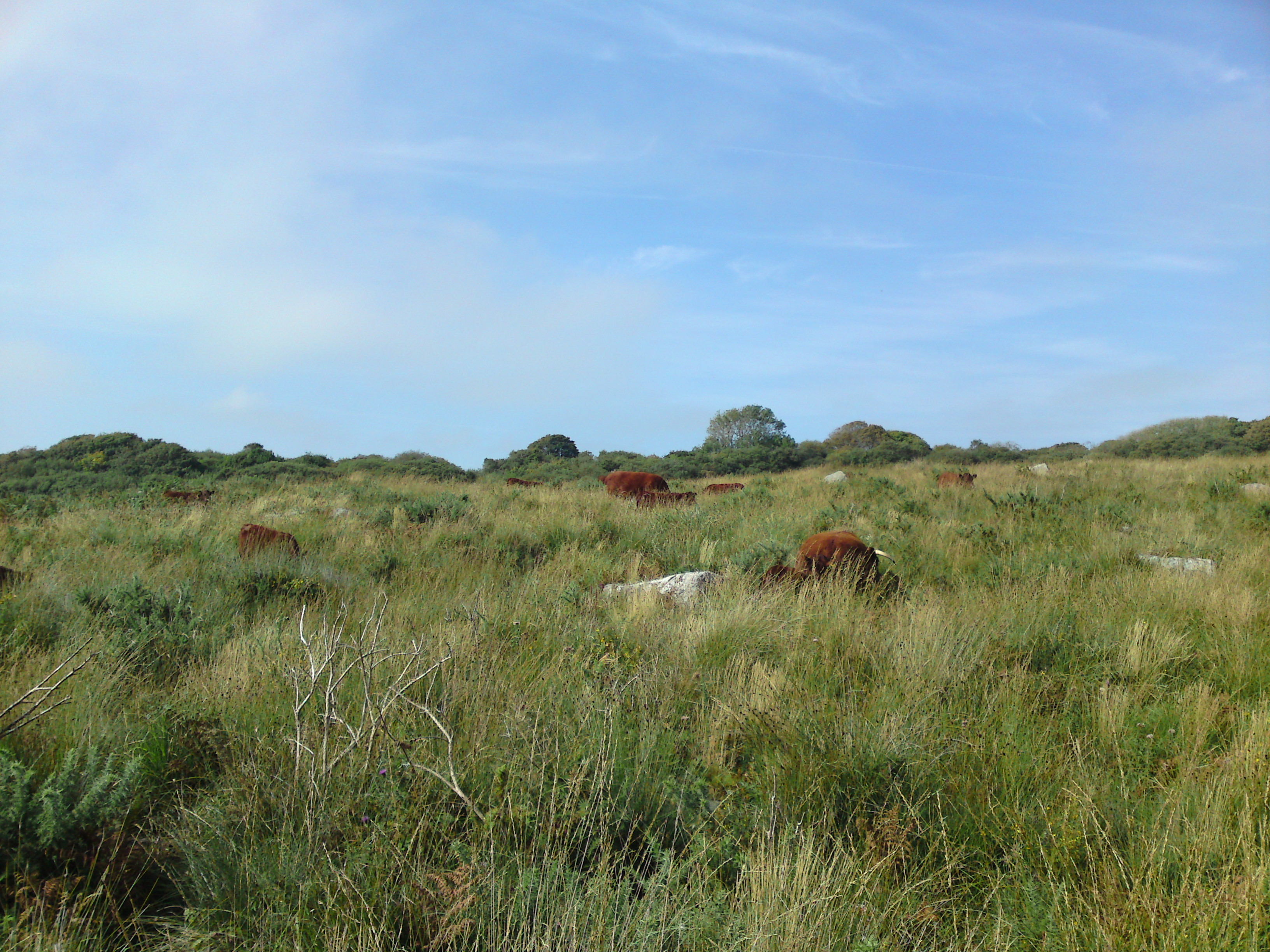 Heathland Cornish Coastal Grass Fed Beef