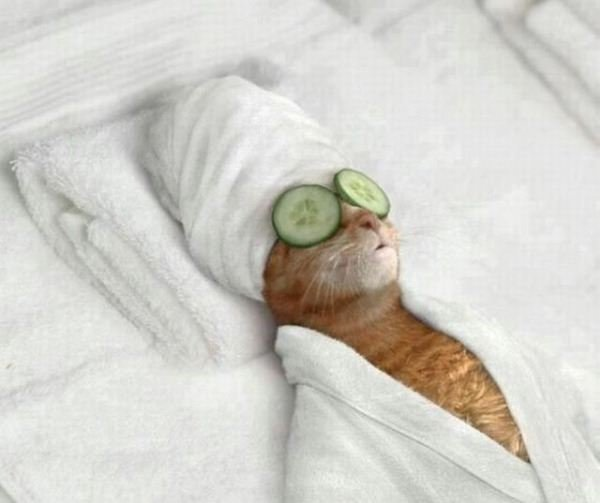 Relaxed cool cat