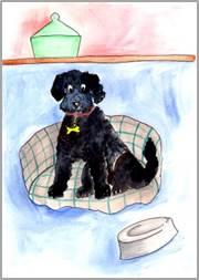 Black Cockerpoo print by Sarah Collins