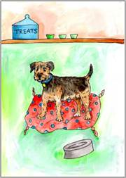 Border Terrier print by Sarah Collins