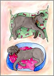 Two Black Labradors print by Sarah Collins