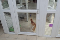 Peticular Pens - Hygienic uPVC Cattery - Hedgerows Cattery & Small Pet Hotel