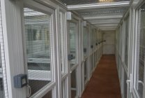 Peticular Pens - Hygienic uPVC Cattery - Lords Hill Cattery - Safety Corridor