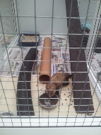 UPVc Ferret Run In Use - Peticular Pens