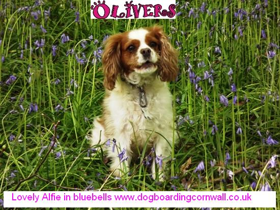 pet sitters in Cornwall