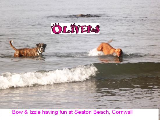 pet sitting Cornwall