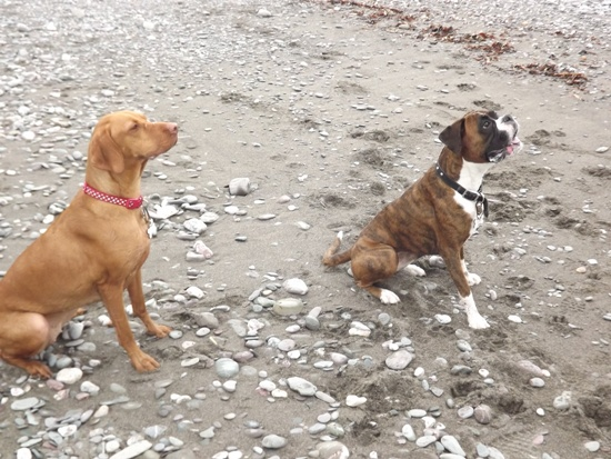 dog sitters cornwall