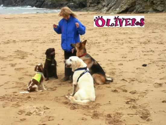 pet sitters Cornwall Devon
