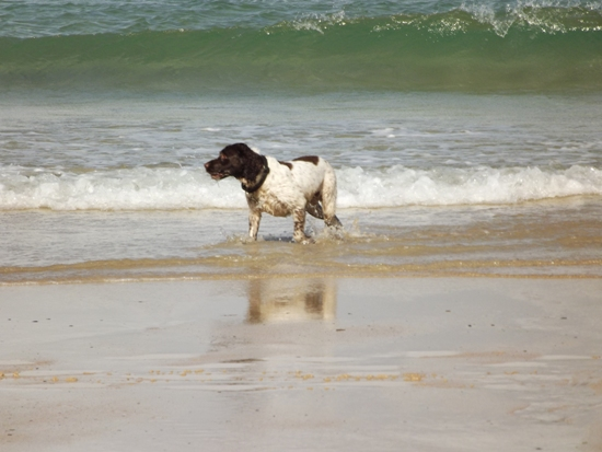 cornwall dog sitters