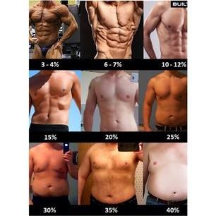 Gtn Fitness - Personal Trainer - Fat Percentage