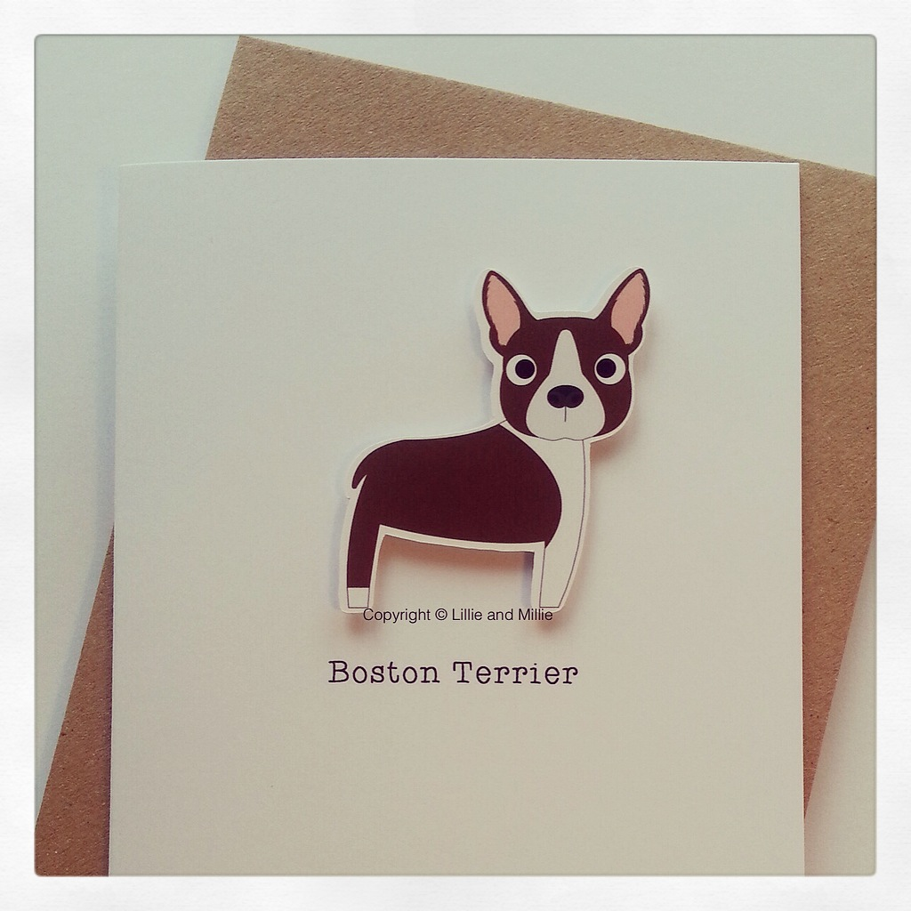 Cute and Cuddly Brown and White Boston Terrier Card