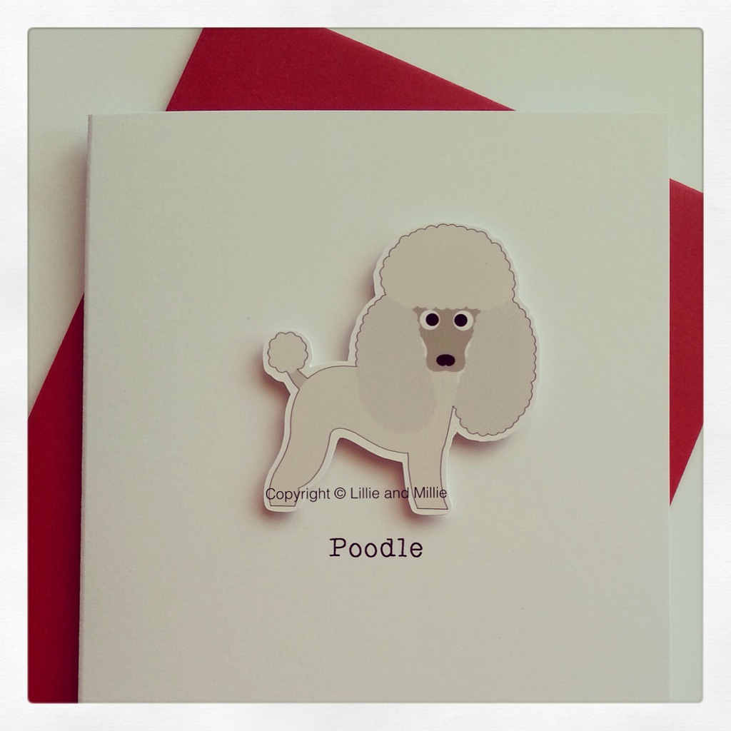 Cute and Cuddly White Poodle Card