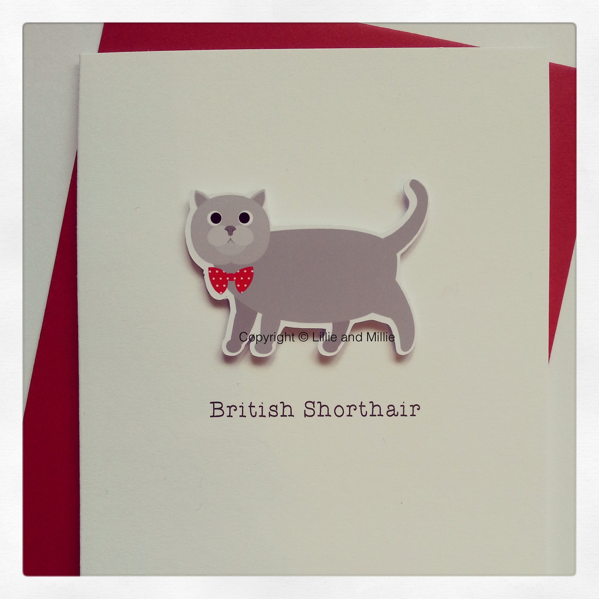 British Shorthair Cute and Cuddly Cat Greetings Card
