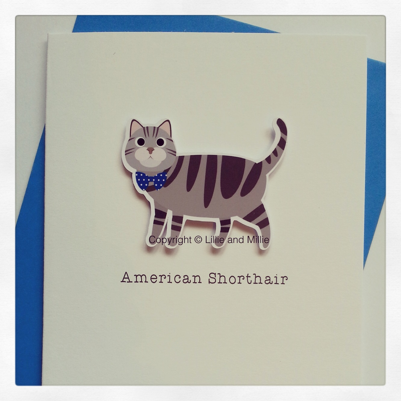 Cute and Cuddly American Shorthair Cat Card