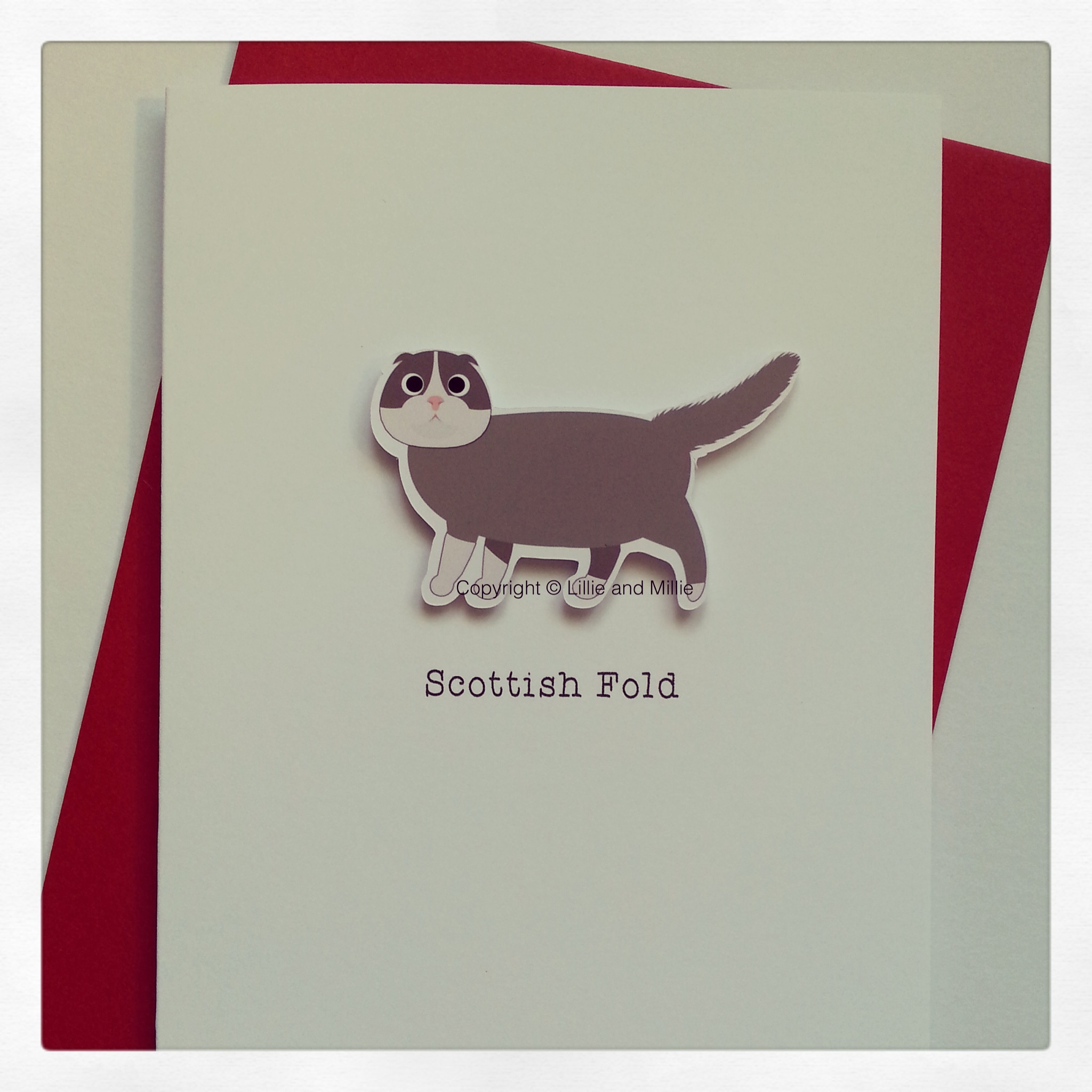 Cute and Cuddly Scottish Fold Cat Greetings Card