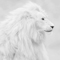 white lion avatar