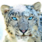 blue leopard avatar